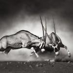 Komplexität, Koevolution und Evolvierbarkeit